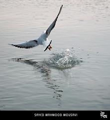 flying by M O U S A V I