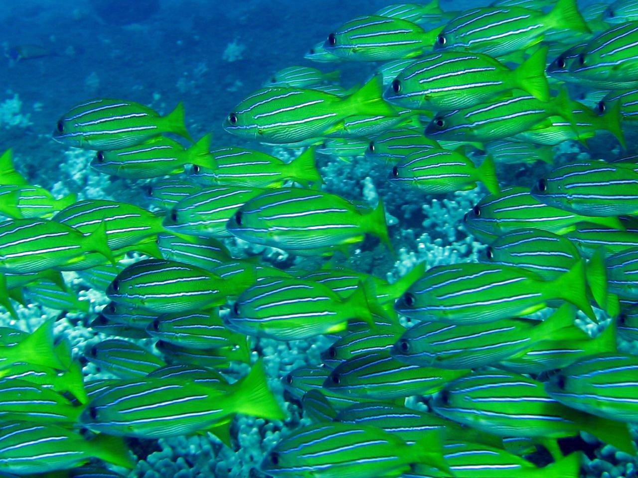 Maui Dive 2-08