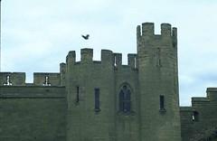 tower defen