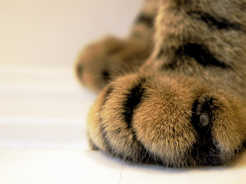 Cute paws | by ngpfjoyce