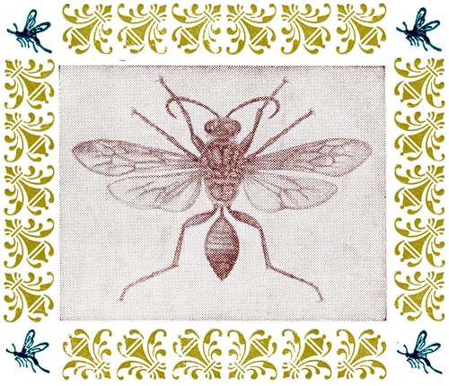 Insect design | by Lunada Bay Letterpress