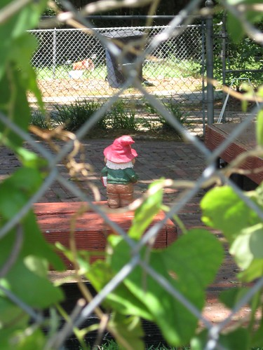 Gnomes on Jessamine Street | by 19melissa68