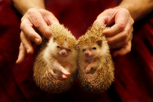 Hedgehogs | by Penelope's Loom