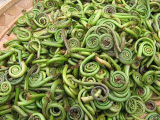Fiddleheads | by GlennFleishman