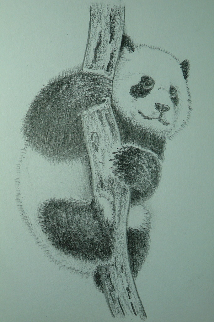 Amazoncom panda planner 2018