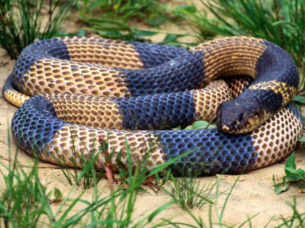 nejnebezpečnější zvířata světa had