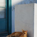 Cool cat, Mykonos