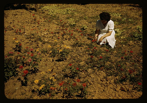 Woman in her garden, Virgin Islands?  (LOC) | by The Library of Congress