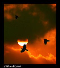 Darksome sky.. by Hamzeh Karbasi