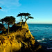 The Lone Cypress in Pacific Grove - Copyright Controversy?