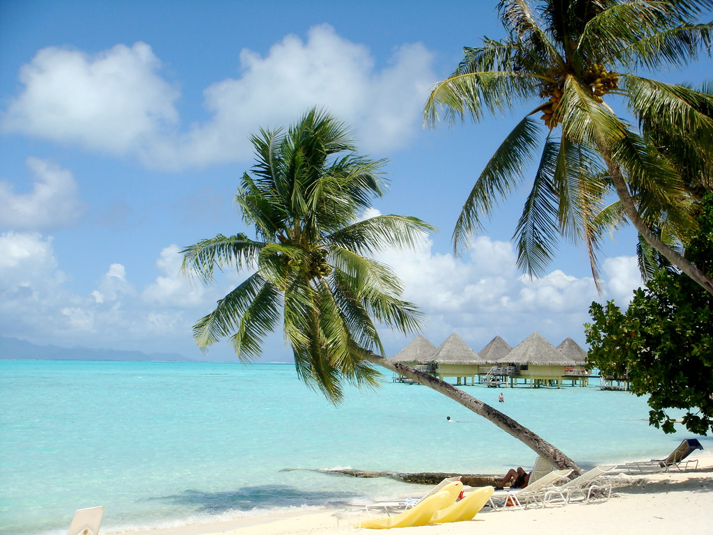 Tropical Beaches With Palm Trees Tropical Island Palm Tree