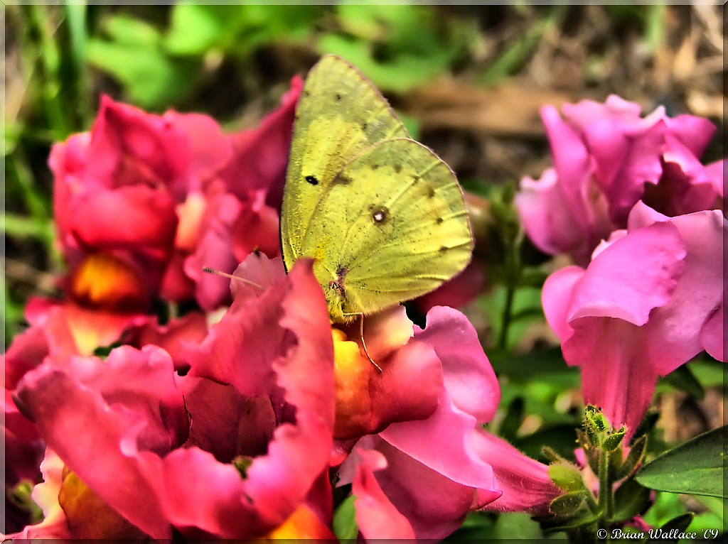 Butterfly 2 2006_2D