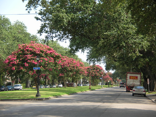 Napoleon Avenue summertime