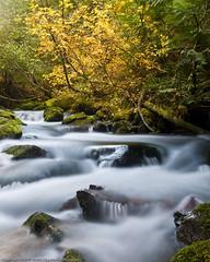 Autumn Stream by dedge555
