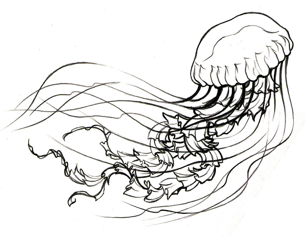 Jellyfish Tattoo Sketch Jellyfish Sketch by