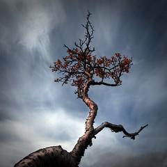 autumn by johann Smari