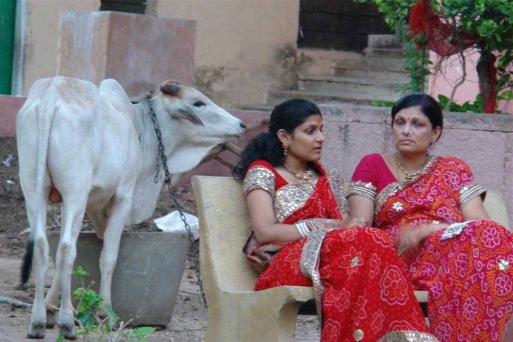 Qué ver en Jaipur: Vida relajada de Jaipur qué ver en jaipur - 4142688687 4b73ae3112 o - Qué ver en Jaipur, India