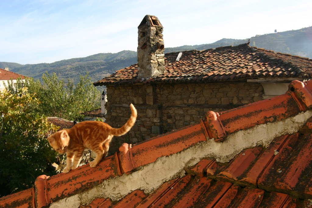 Cat on the roof in Sirince