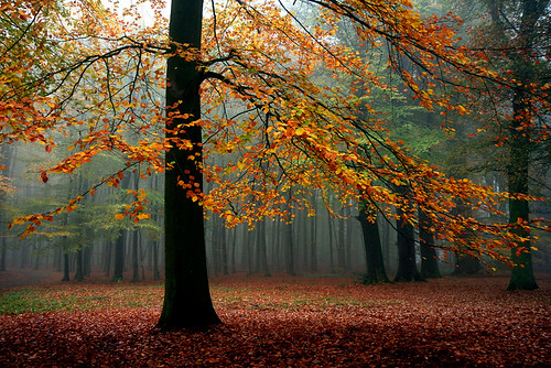 Foggy Forest | by Roeselien Raimond