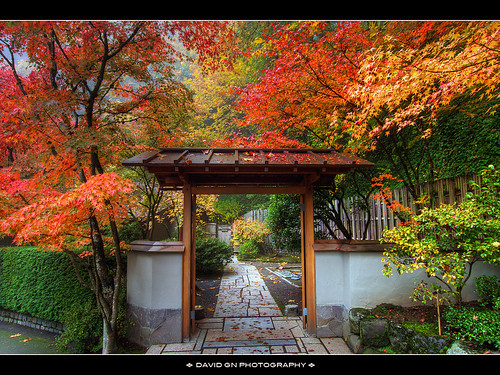 Autumn Colors at Portland Japanese Garden 3 | by David Gn Photography