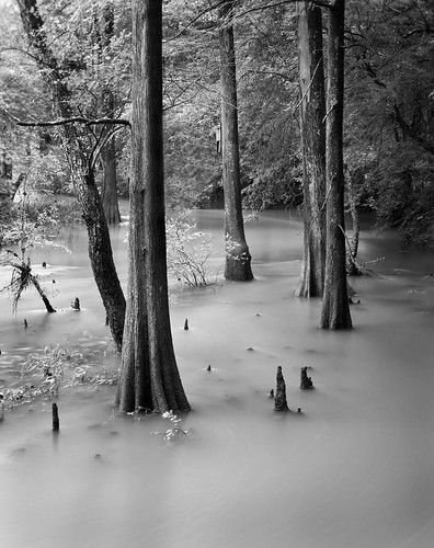 Little Maumelle River | by clay.wells