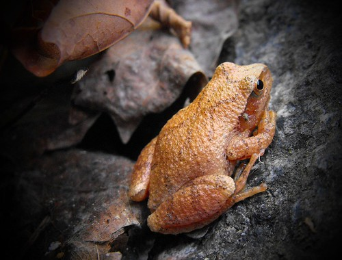 Toad_strongvignette | by Dom C.