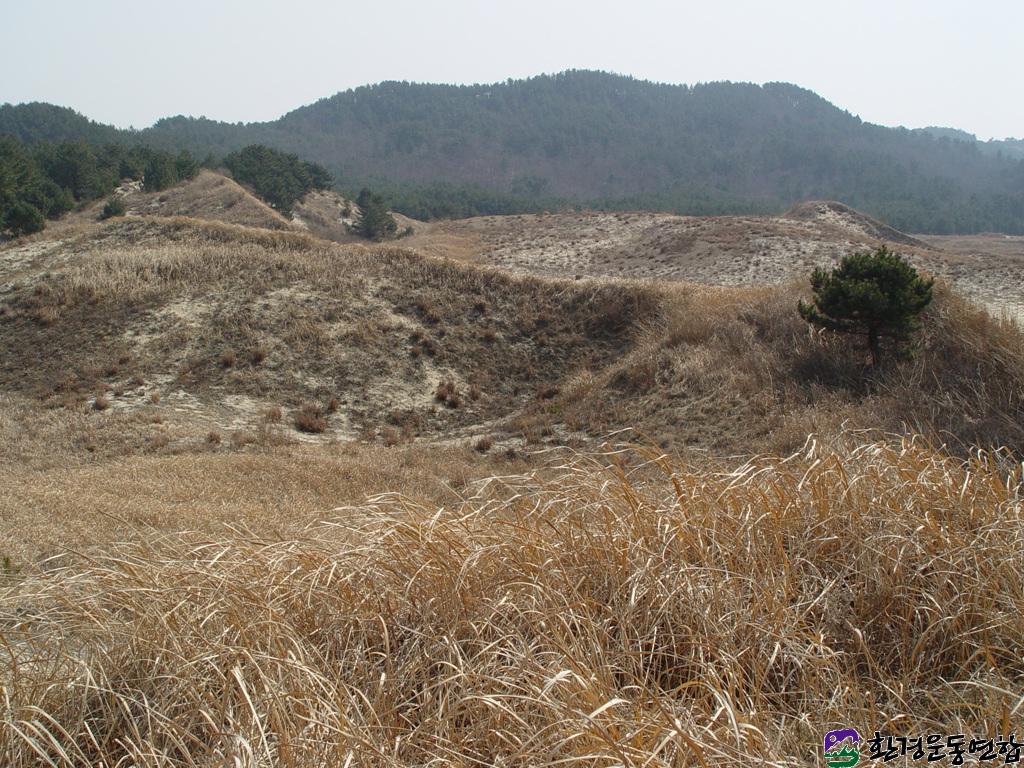 20040309-태안-신두리 해안사구