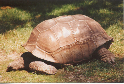 Tortoise | by Potter Park Zoo