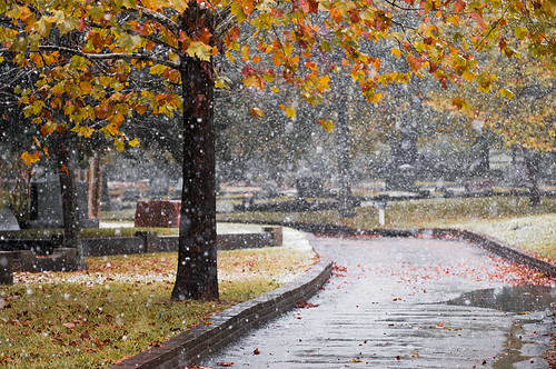 Autumn Snow | by jeffbalke