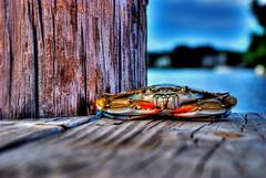 Maryland Blue Crab (best viewed large) by nickfornaro21