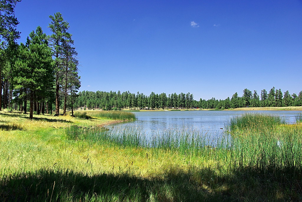 Kaibab National Forest Unit 8 Flickr Photo Sharing