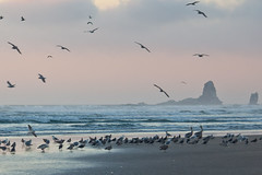 Cannon Beach, Oregon - Sept 09 by Strober