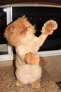 Cat Hair Makes People Sterile