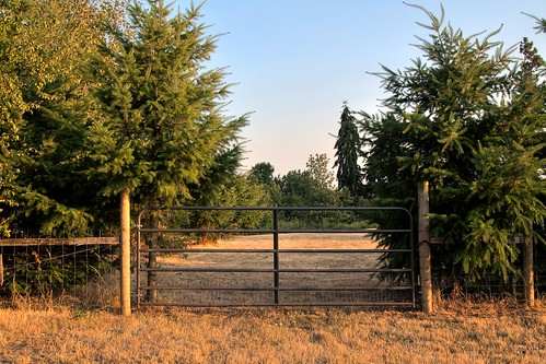 Put Up A Fence To Keep Me Out Or To Keep Mother Nature In | by Celine Chamberlin