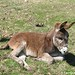 The Daily Donkey 95 - Young Esmeralda Sitting Pretty
