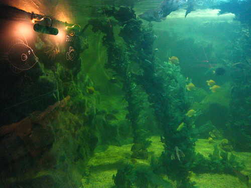 Brighton Sea Life Centre (7) | Pictures from inside the ...