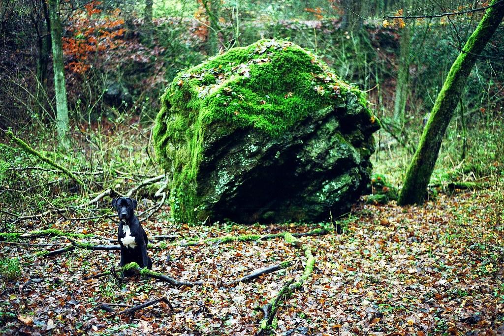 Nationaler geotop schlade schlader tal bergisch gladbach germany flickr photo sharing - Mobel bergisch gladbach ...