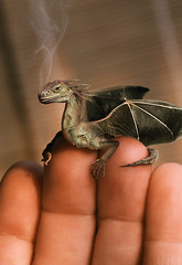 Baby Dragon | by julialing
