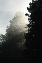 Sun streaming through the trees during a break in the storm by Schelvism