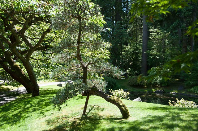 Nitobe Memorial Garden-10