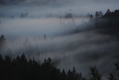 Draped in Fog by Schelvism