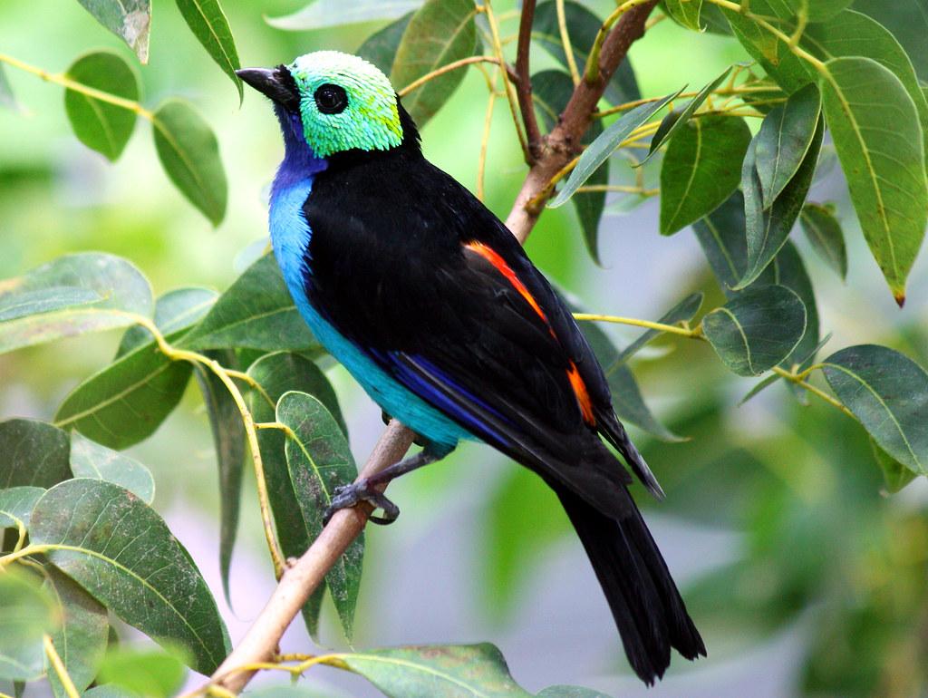Interesting Rainforest Birds Rainforest Birds And