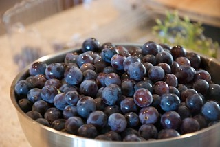 Blueberries are Photogenic | by Ryan Anderson