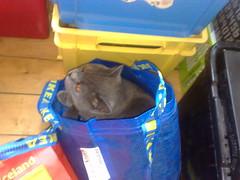 Sebo in a bag :o by djsmiley2k
