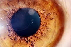 Human Eye - Extreme Macro by Elad V.
