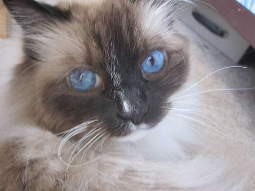 Hills Pet Cat Food Coupons