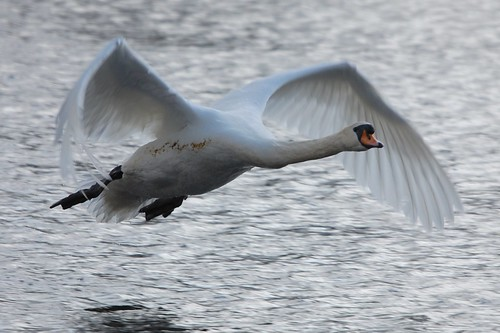 In Flight | by dave millers photos