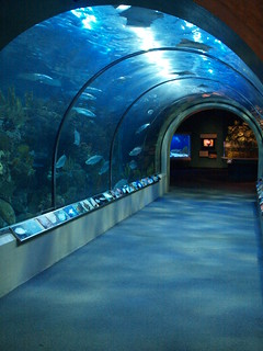 New Orleans Louisiana The Audubon Aquarium of the Americas  exhibits of animals and species 2010 Jellyfish Parrots Sharks turtles Sea Otters Catfish fish Owls  Penguins Eels Stingrays Caribbean reef Amazon Mississippi River Gulf of Mexico Cajuns Neworlean | by mrchriscornwell