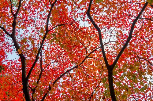 紅葉狩り - 東山公園 05