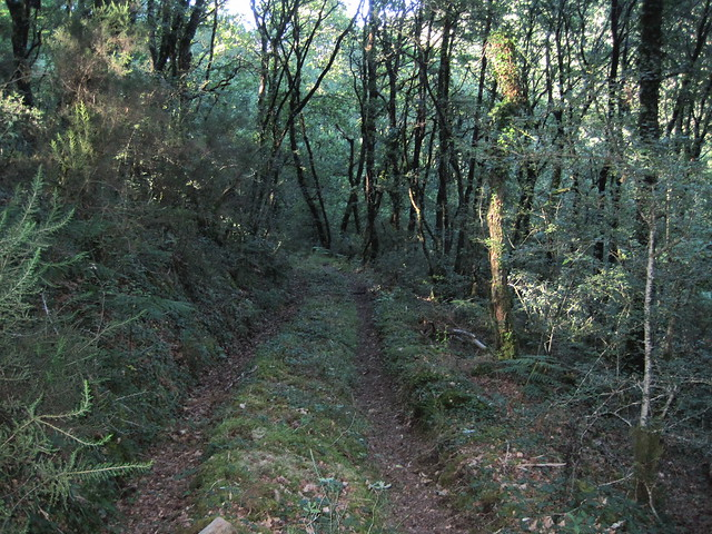 Sendero en la Ruta do Río Dubra / Devesa de Gontar